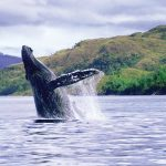 HUMPBACK WHALE WATCHING (3 Days)